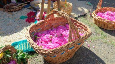 Корзина с лепестками роз. Фестиваль роз в Болгарии.